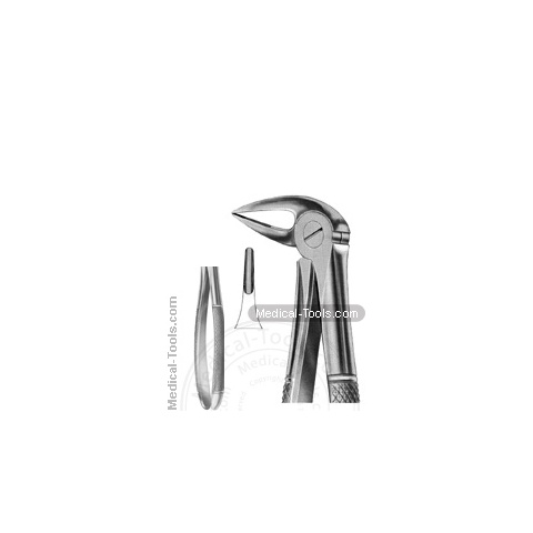 English Extracting Forceps No.33 M