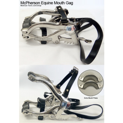 Equine Millennium Speculum